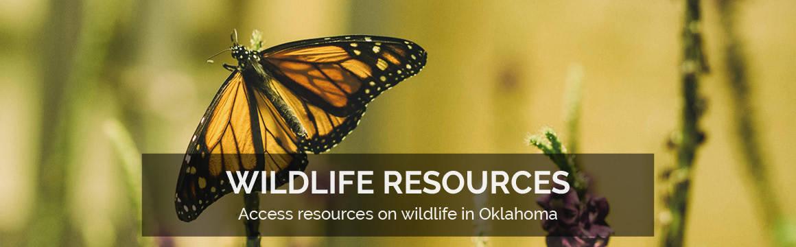 Slideshow - Wildlife Resources