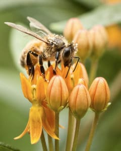 insect-bee-pollen-indiana-mark-brinegar